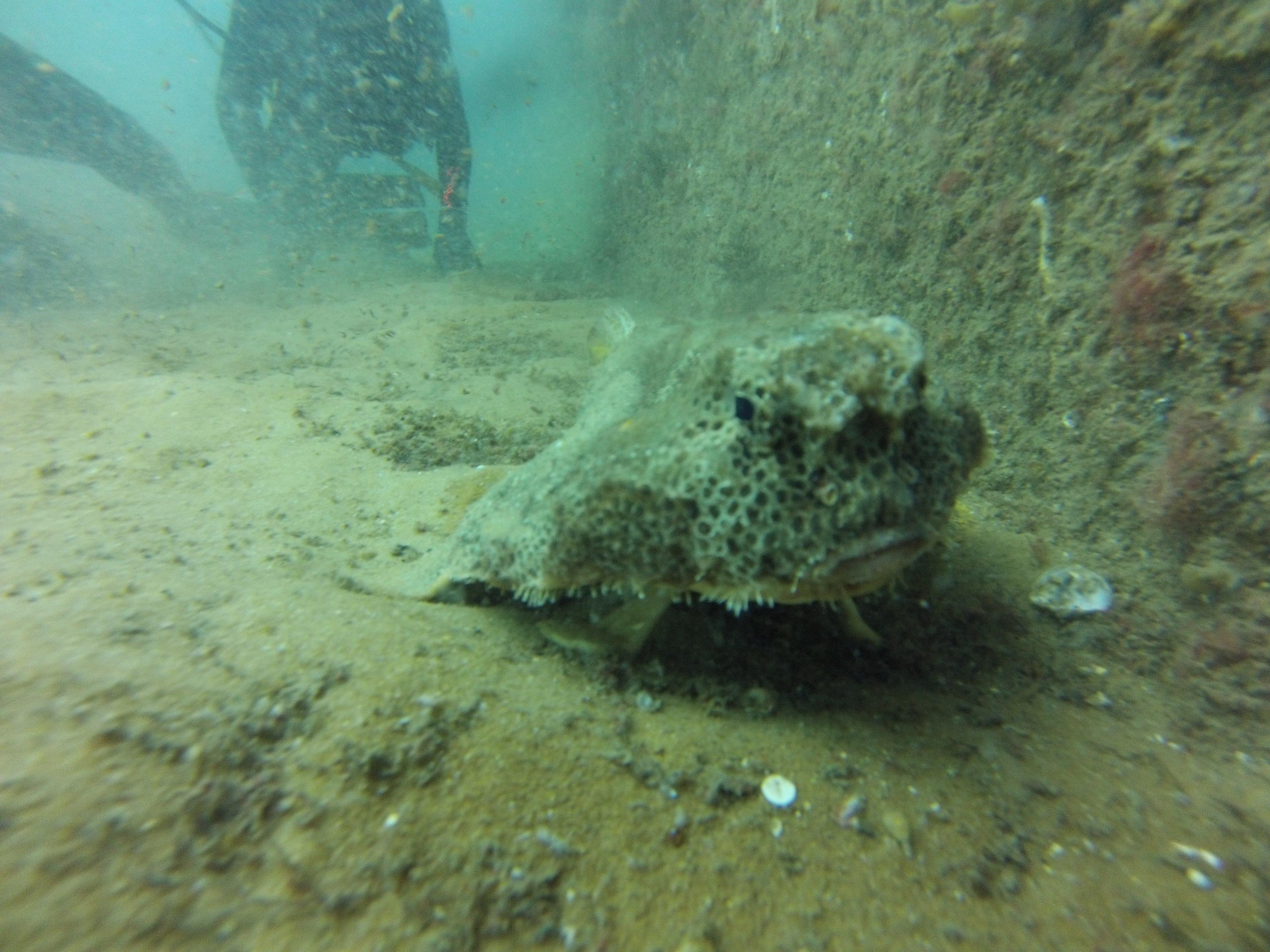 Joe Patti Memorial Reef Florida Dive Pros